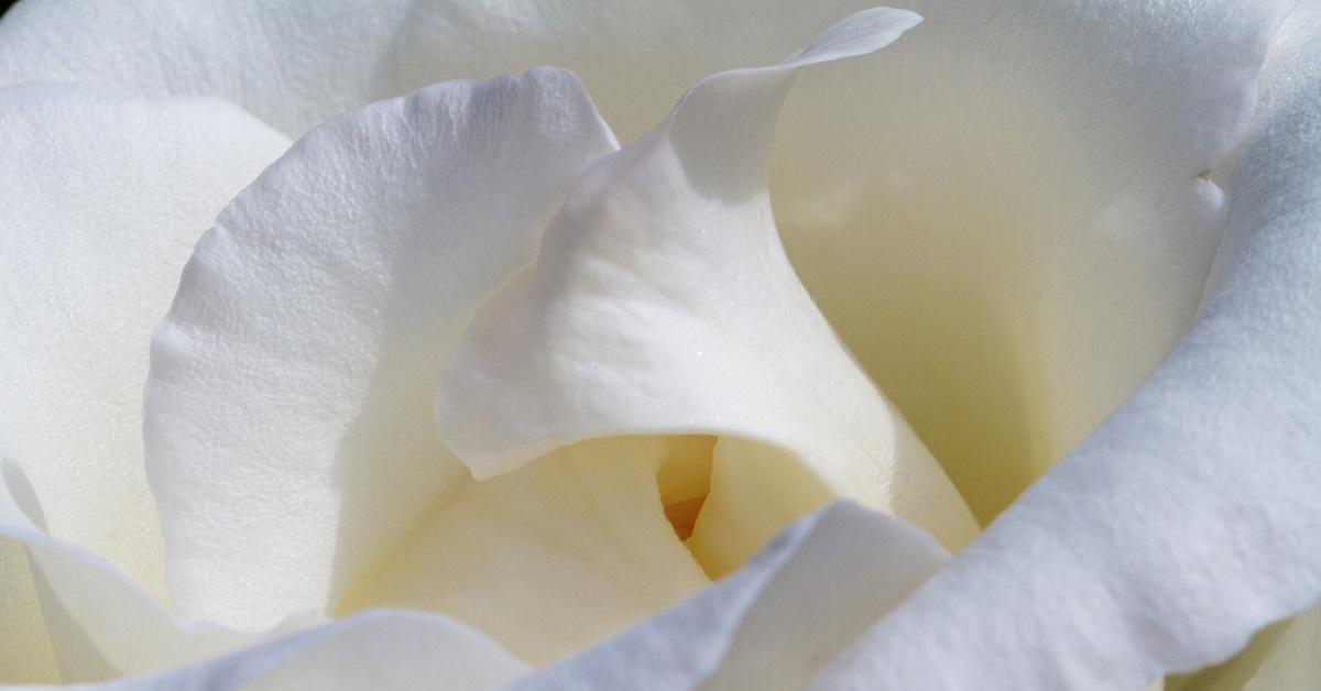 Rózsa (TAO) esszenciák