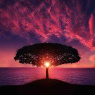 A változás évei a One Brain Kineziológiában