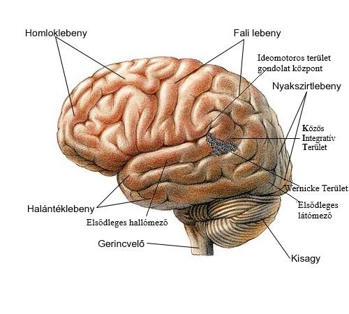 Közös integratív terület helye az agyunkban- K.I.T.